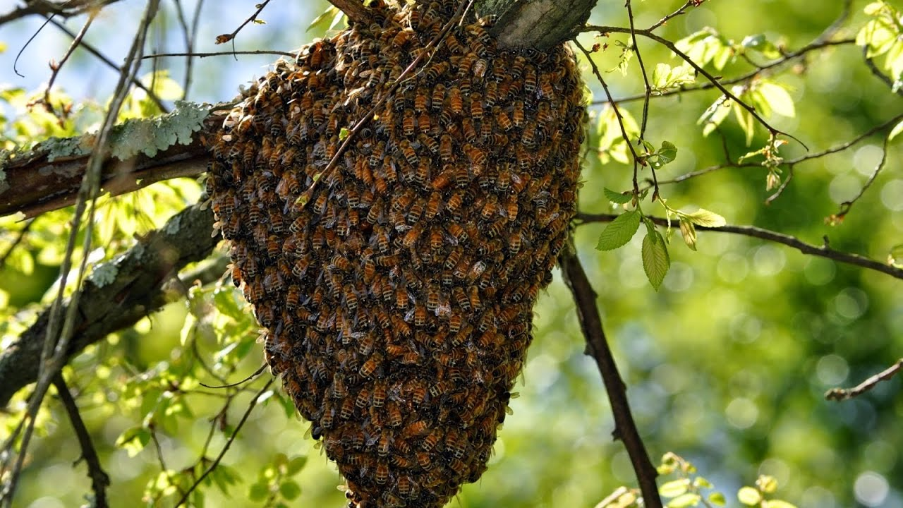 Где обитают дикие пчелы, и какие бывают виды фото