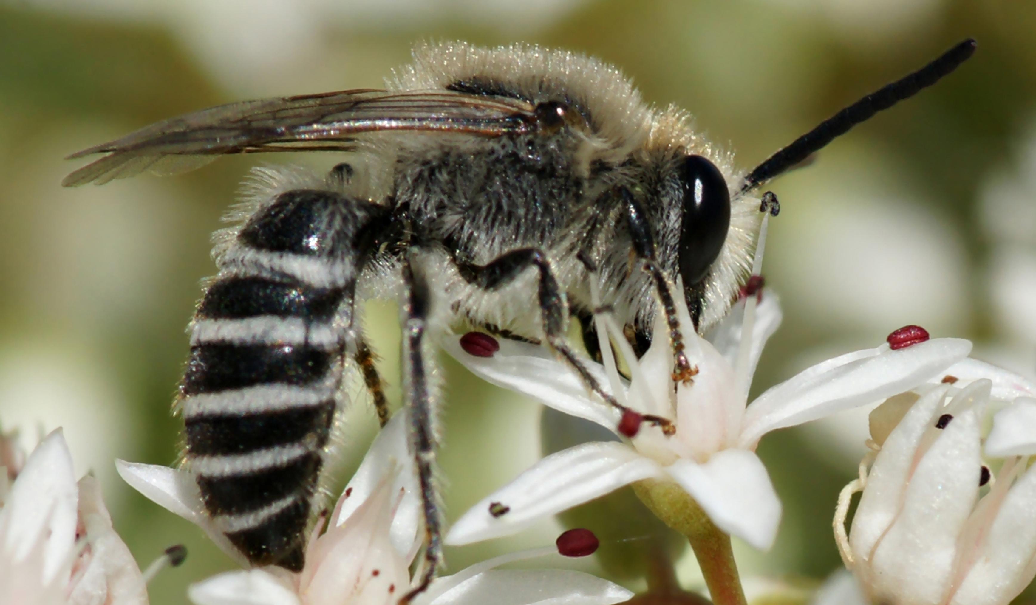 Какие бывают недостатки от разведения диких пчел фото