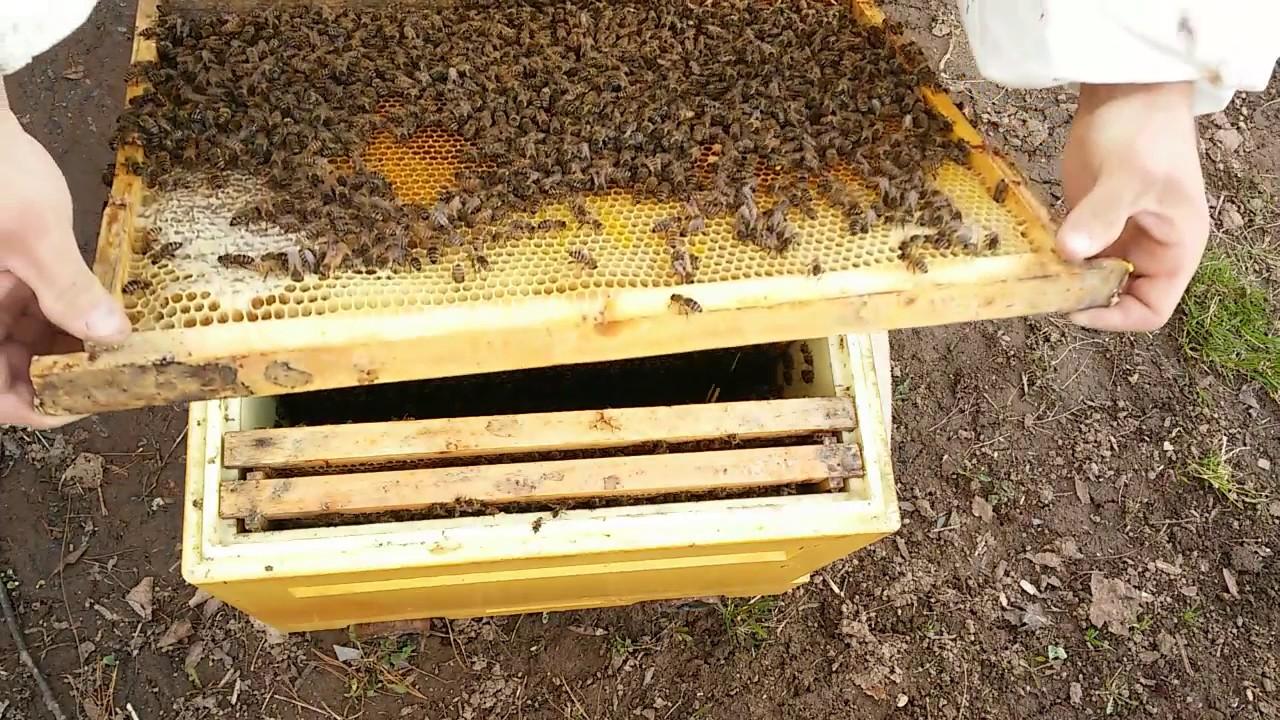 Особенности содержания пчел фото