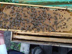 Содержание пчел в ульях на рамку 145 фото