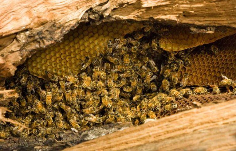 Характеристика диких пчел фото