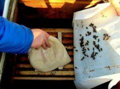 Канди для пчел — когда подкармливать и как приготовить фото