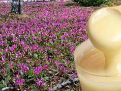 Кандык мед — полезные свойства и противопоказания фото