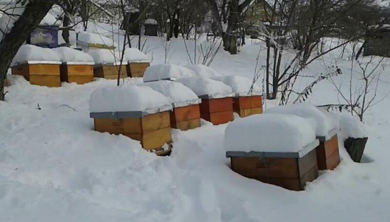 Зимовка пчел на улице фото