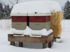 Зимовка пчел сравнение зимовок ульев на улице фото