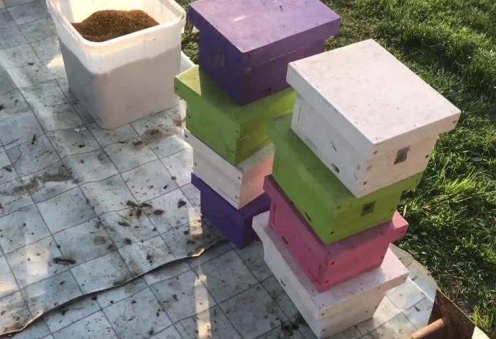 Зимовка пчёл в нуклеусах фото