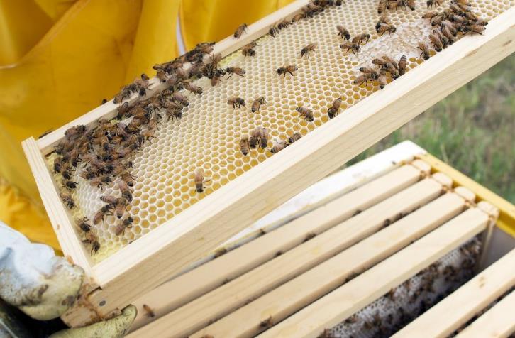 Пчелиные рамки и соты расположение, размеры, конструкции фото