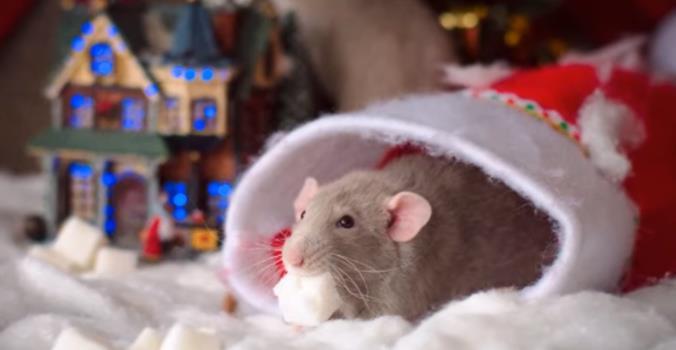 Как встречать Новый 2020 год белой металлической крысы — идеи и советы