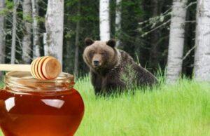 Таежный мед полезные свойства и противопоказания