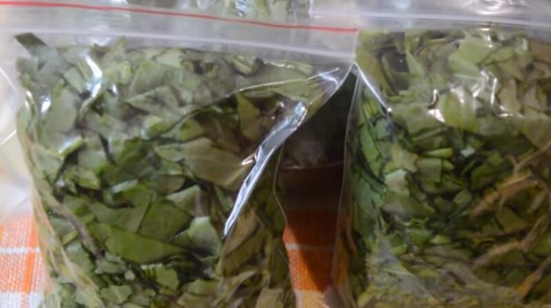 Как заморозить щавель на зиму в холодильнике в пакетах для супа (заготовка в морозилке)