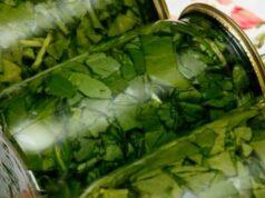 Щавель на зиму — 11 лучших рецептов заготовки щавеля в банках